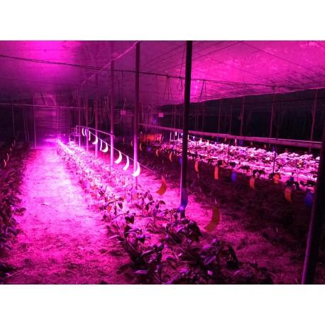 Luz de cultivo cada dos lineos en invernadero